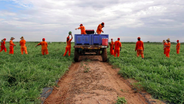 How American Prison Labor has Transformed into Modern-Day Slavery